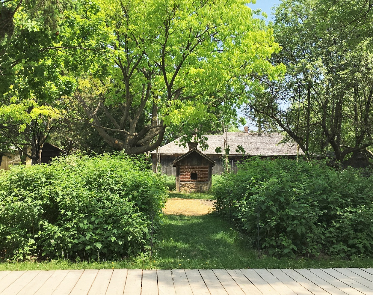 berry garden at Black Creek Pioneer Village