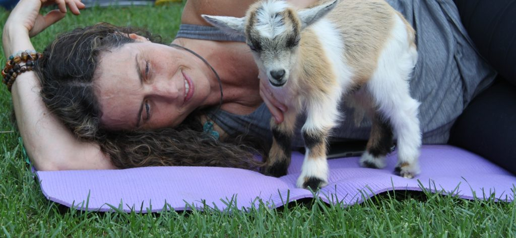 goat yoga session at Black Creek Pioneer Village