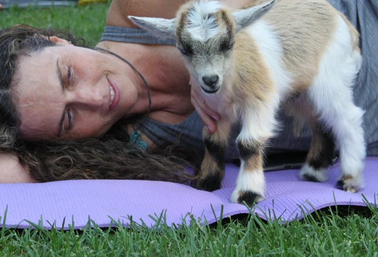 goat yoga session at Black Creek Pioneer Village