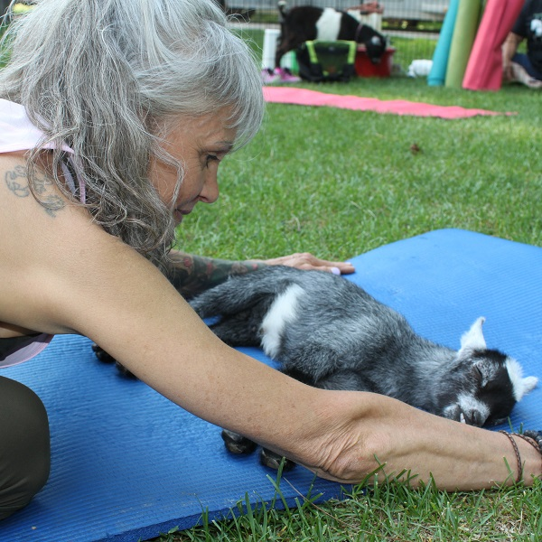 goat yoga class at Black Creek Pioneer Village