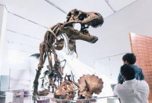 Tyrannosaurus Rex Fossil Cast at the ROM