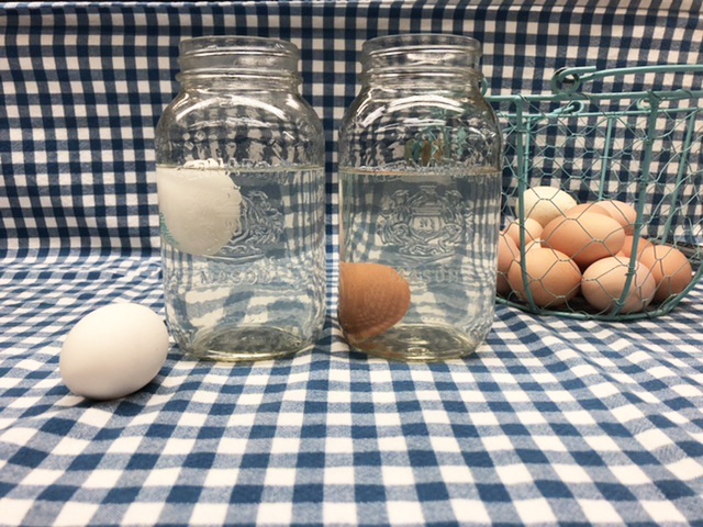 fresh egg sinks to bottom of jar while older egg floats to surface