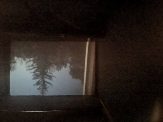 Upside-down image of a tree projected inside a camera obscura