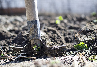 farmer digs soil with shovel