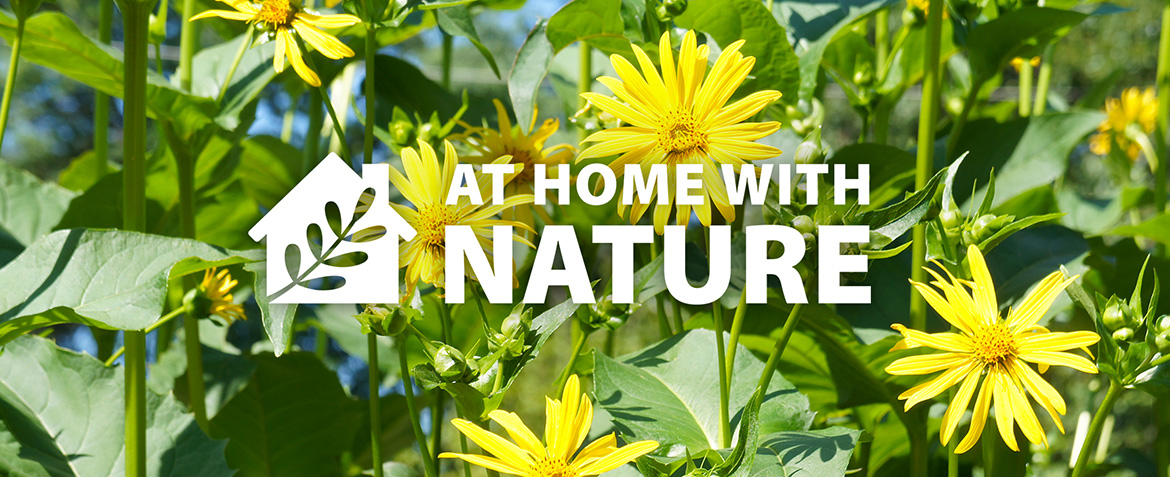 TRCA At Home with Nature webpage banner