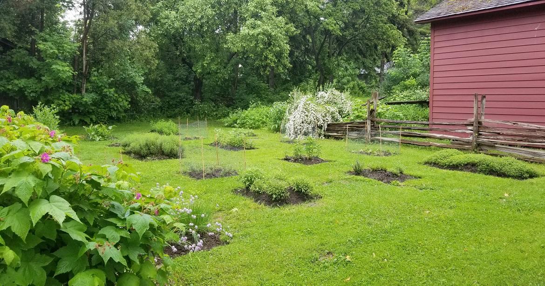 herb garden at Black Creek Pioneer Village featrues pattern of rectangular beds