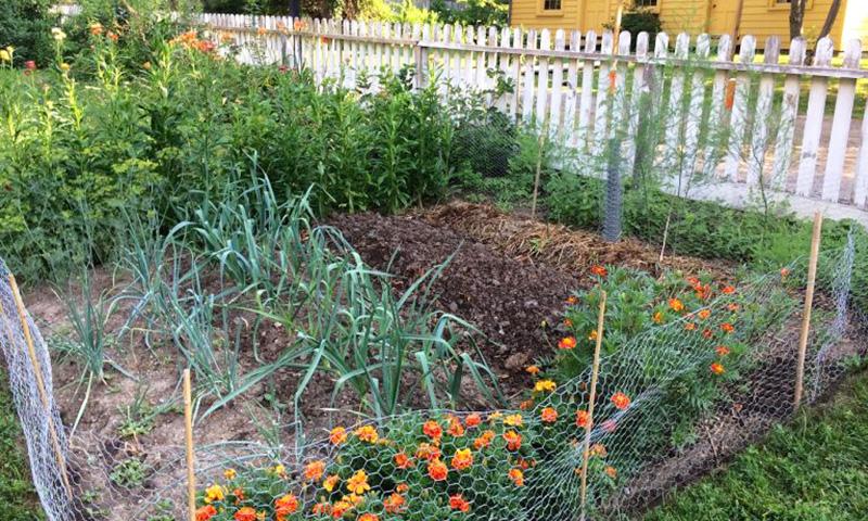 kitchen garden at Burwick House in Black Creek Pioneer Village