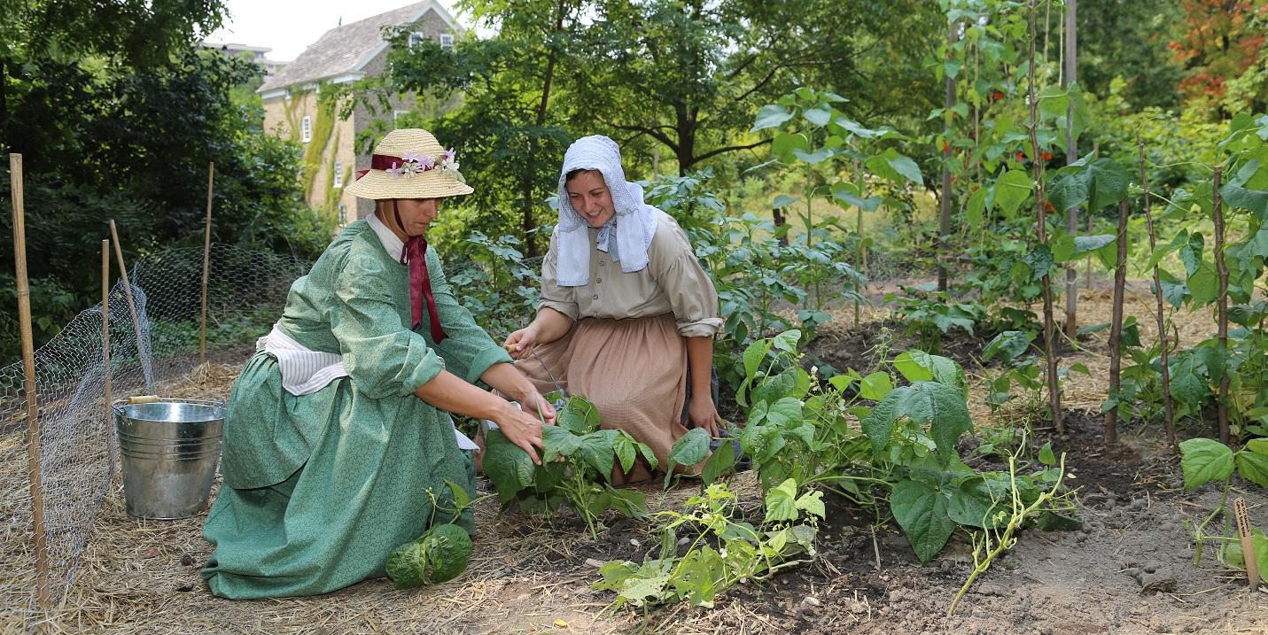 costumed educators tend to vegetable garden at Black Creek Pioneer Village