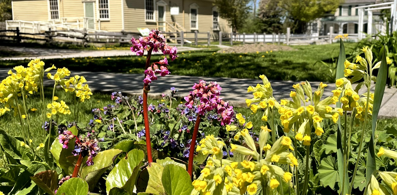 discover the plants and animals of Black Creek Pioneer Village on an outdoor guided experience