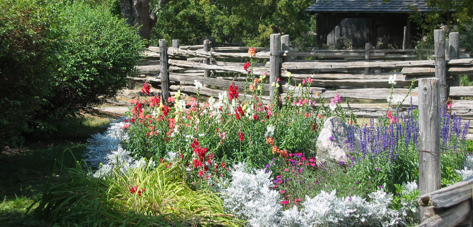 a flower garden blooms in the summertime at Black Creek Pioneer Village