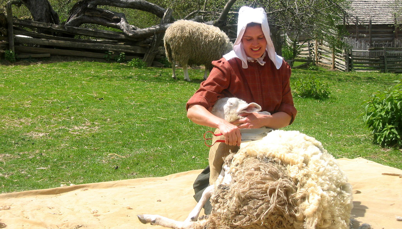 young woman shears a sheep