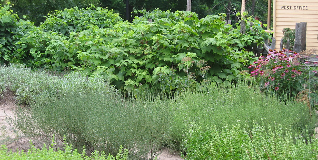 herb garden at Black Creek Pioneer Village