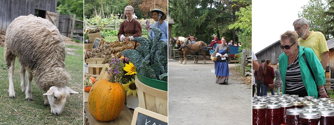 visitors to Black Creek enjoy the annual Pioneer Harvest Festival