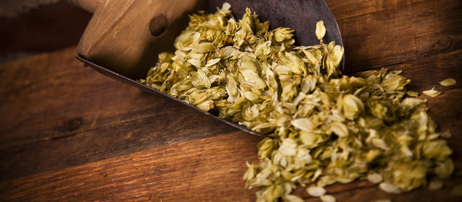 scoop of hops on a counter at Black Creek Brewery