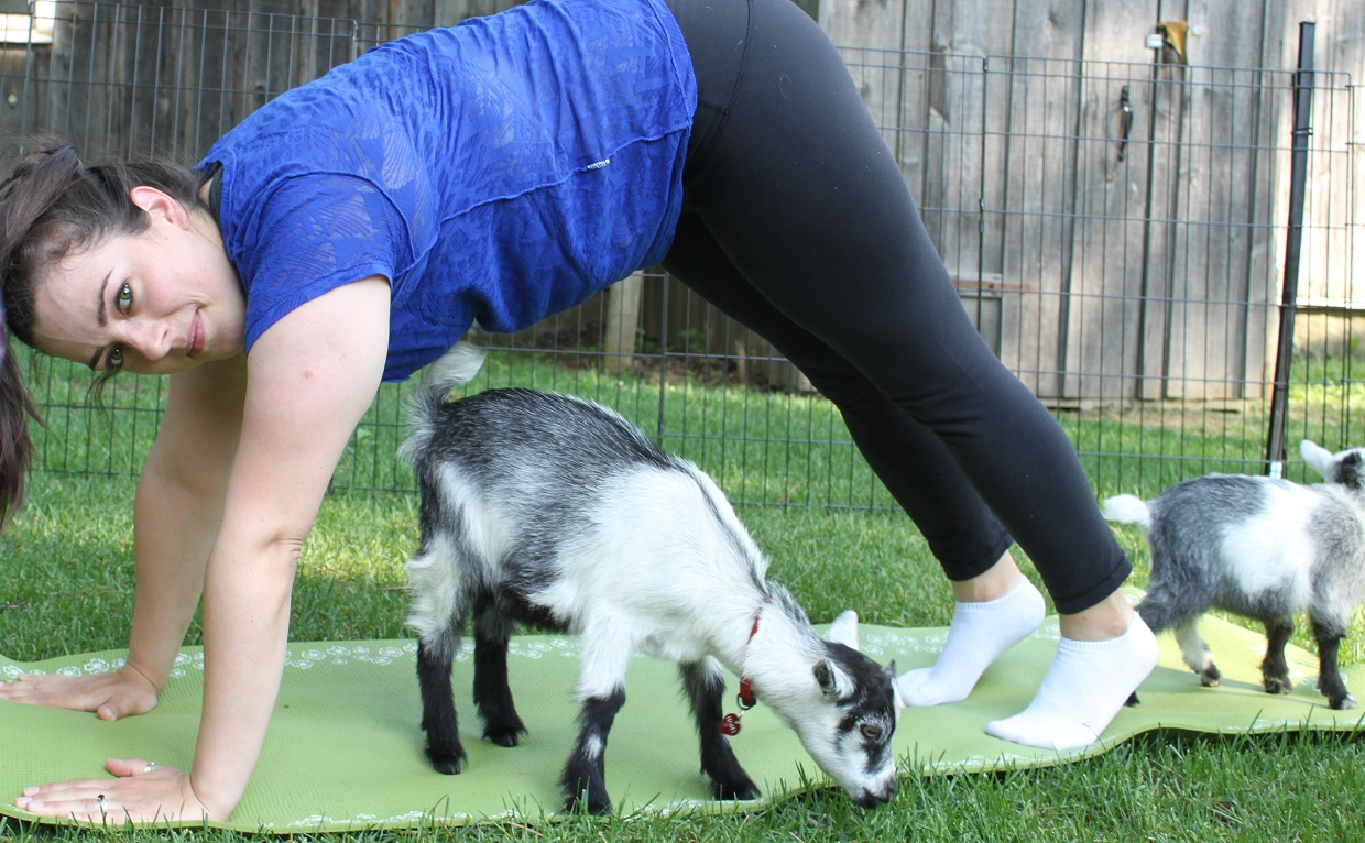 woman at Black Creek Pioneer Village goat yoga class