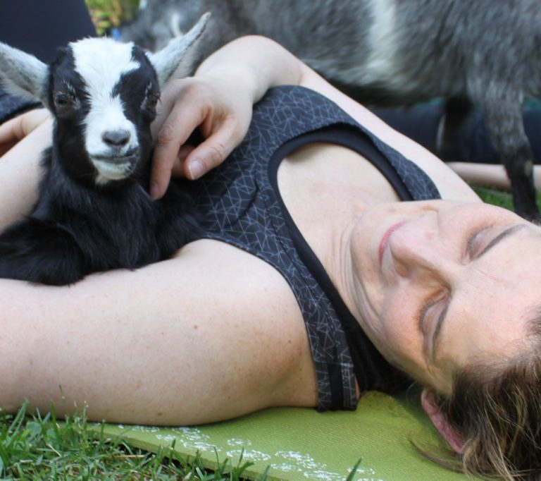 goat yoga class at Black Creek Pioneer Village