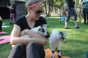 Baby Goat Yoga @ Black Creek Pioneer Village